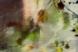 Plants through Garage Window, Nature Plants and Plastic Series, by Karen Klugman