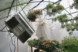 Radio Hanging in Greenhouse, Nature Plants and Plastic, by Karen Klugman