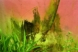 Mold in Greenhouse, Nature Plants and Plastic Series, by Karen Klugman
