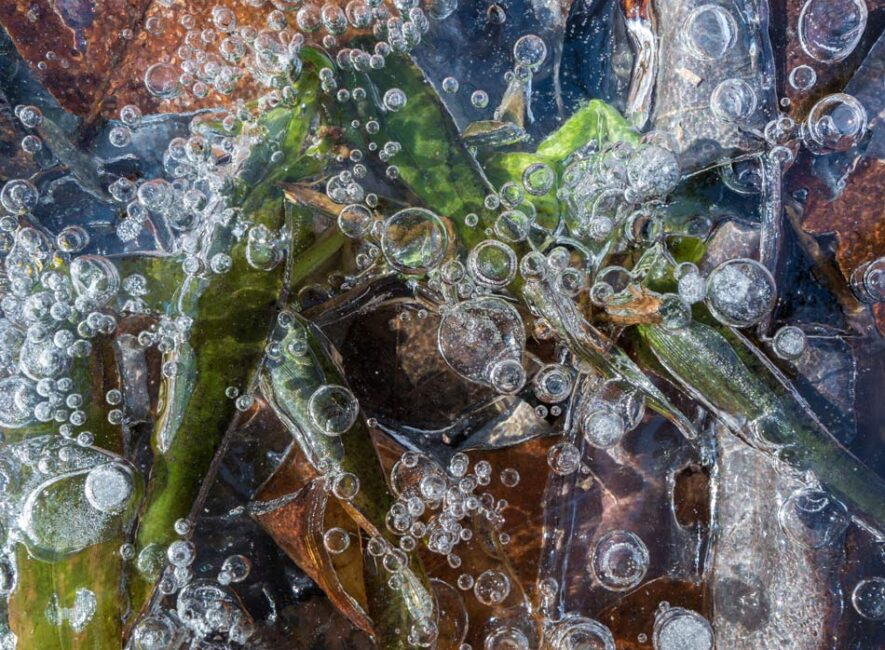 Ice with Bubbles on Forest Floor
